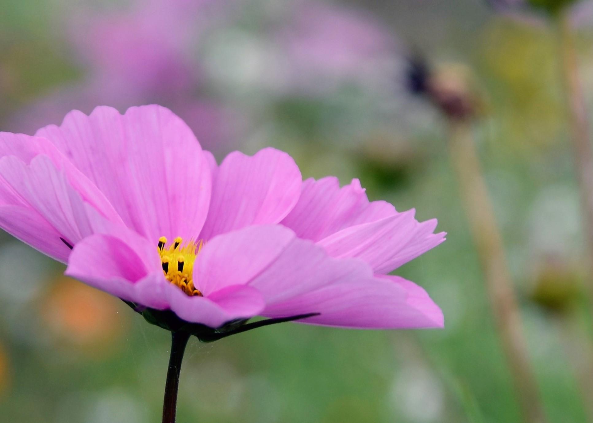 lilla_blomst (3)